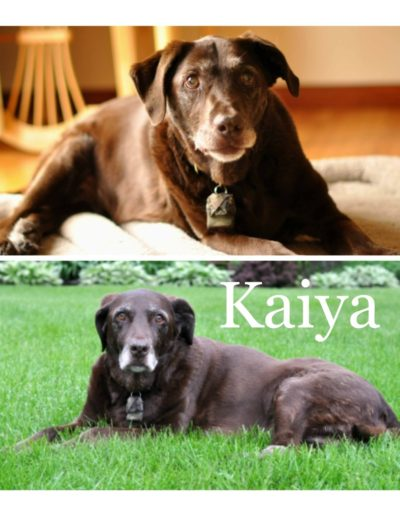 kaiya4